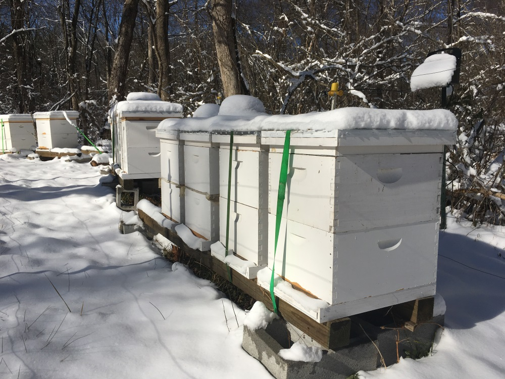 A row of beehives in an apiary covered in snow.